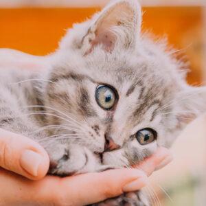 petsmart adoption program