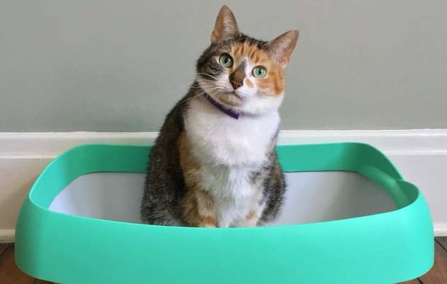 Top 10 Reasons Your Cat Might Have Stopped Using Their Litterbox