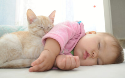 Cats and New Babies
