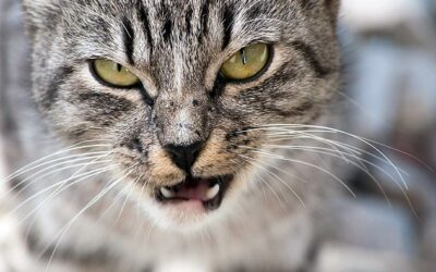 Aggression in Cats