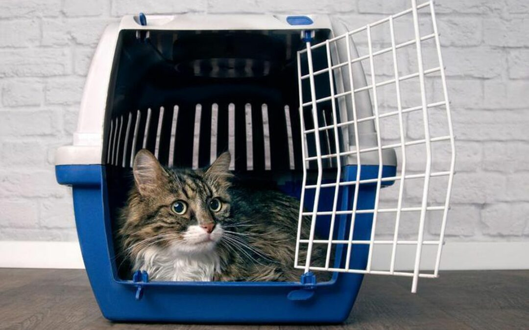 Acclimating Your Cat to a Carrier