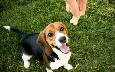 Training Your Pet Using Positive Reinforcement