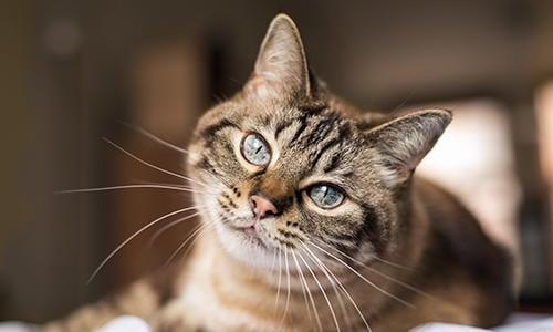 Feline Kitty Cold