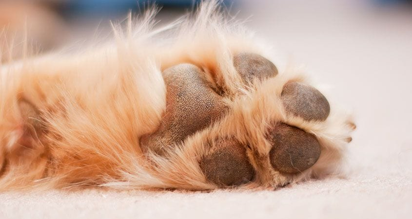 Protect Your Dog's Paws on Hot Cement