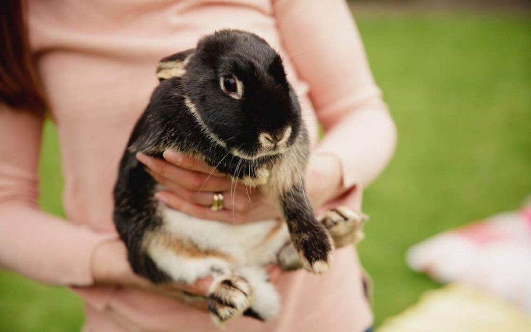 Litter Training Your Rabbit