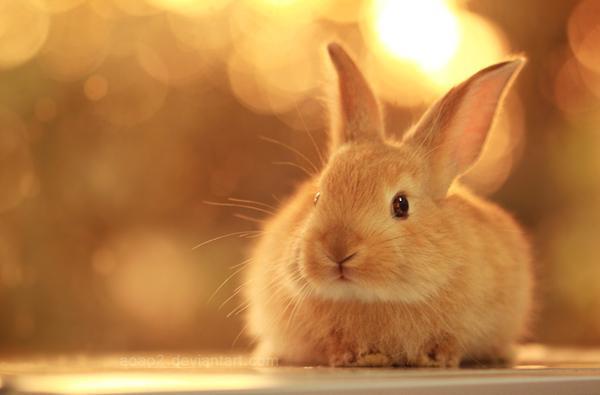 Basics of Rabbit Behavior