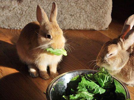 Rabbit Produce Guide
