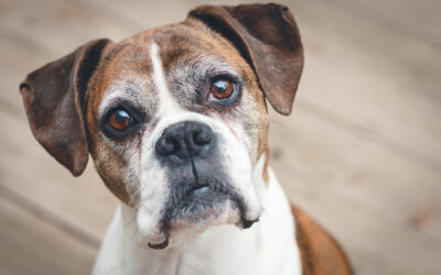 Adopting a Senior Pet