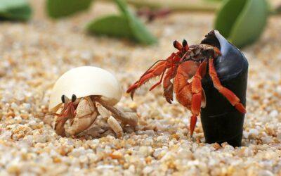 Hermit Crabs- The Basics